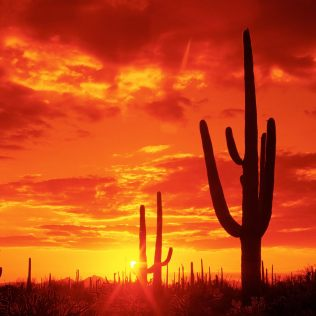 Burning Sunset, Saguaro National Park. Arizona